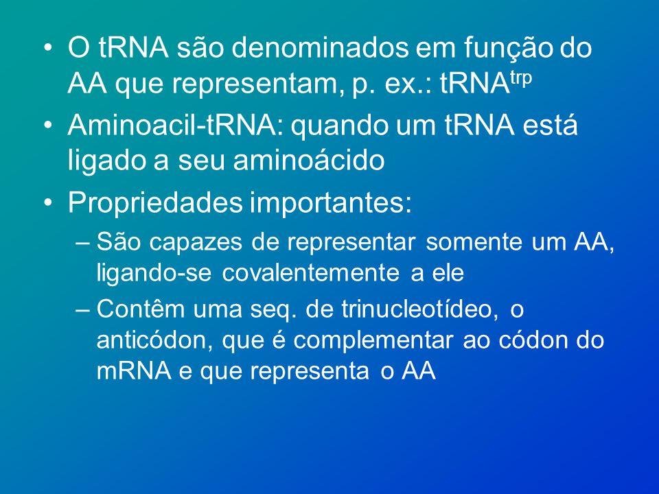 Aminoacil-tRNA: quando um tRNA está ligado a seu aminoácido