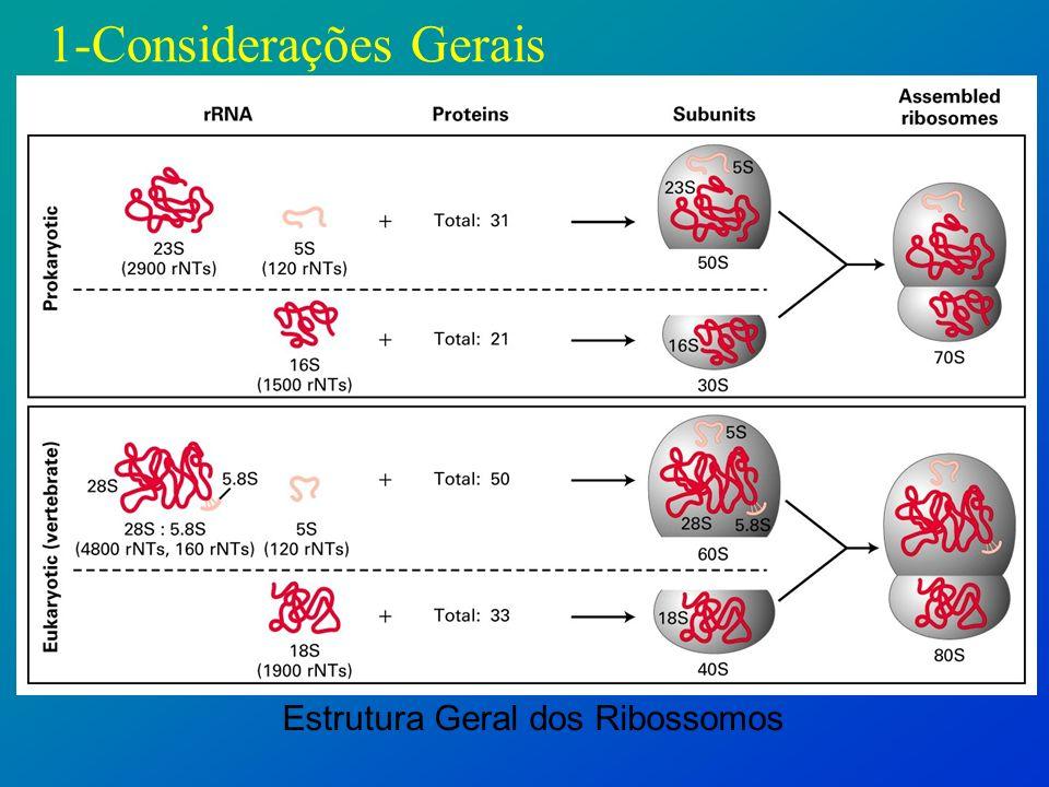 Estrutura Geral dos Ribossomos
