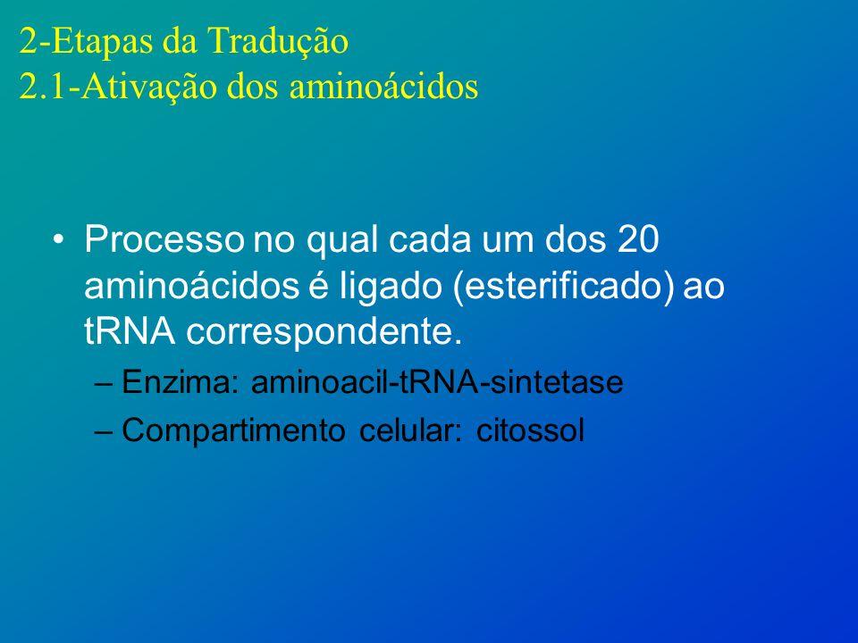 2.1-Ativação dos aminoácidos