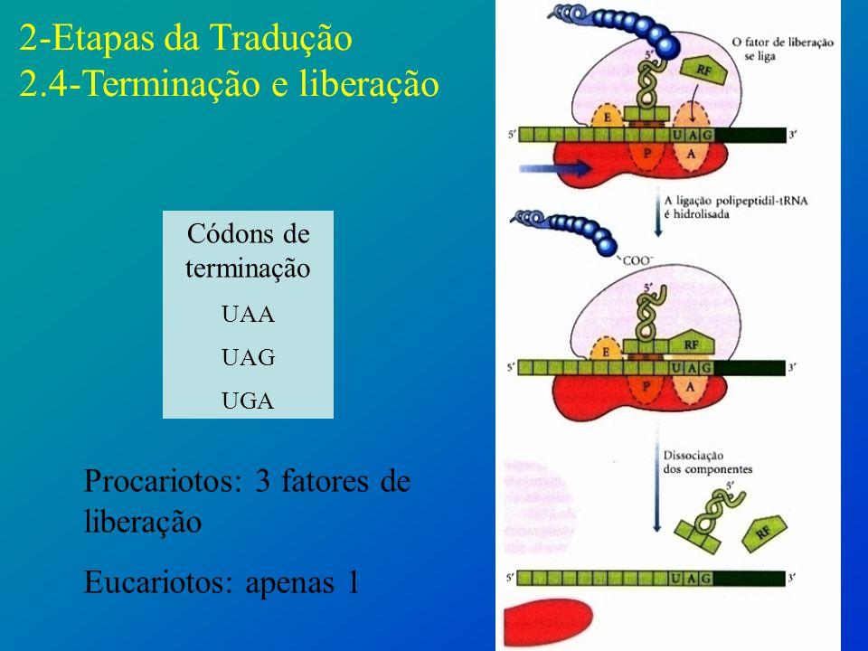 2-Etapas da Tradução 2.4-Terminação e liberação
