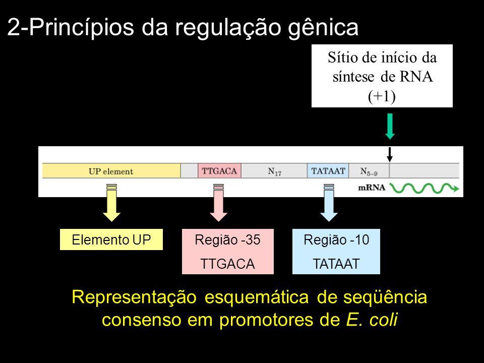 Sítio de início da síntese de RNA (+1)