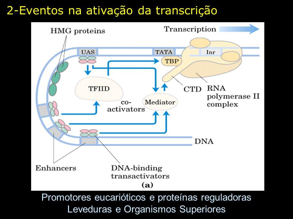 2-Eventos na ativação da transcrição