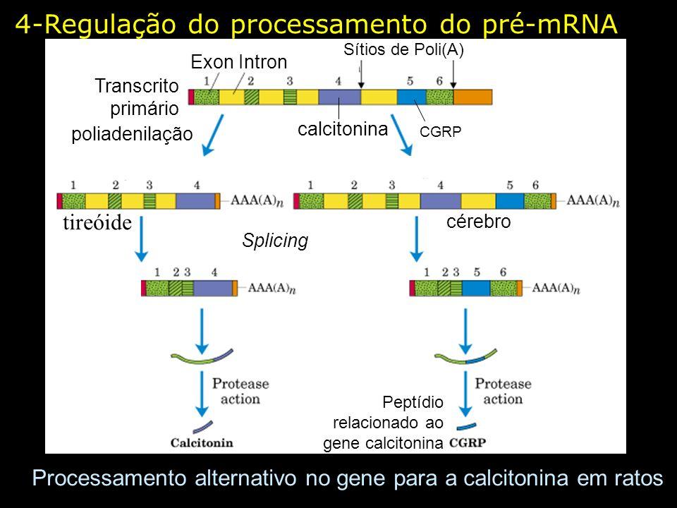 Processamento alternativo no gene para a calcitonina em ratos