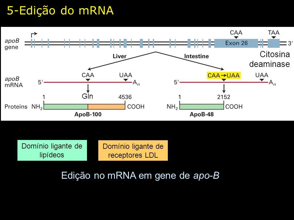 5-Edição do mRNA Edição no mRNA em gene de apo-B Citosina deaminase