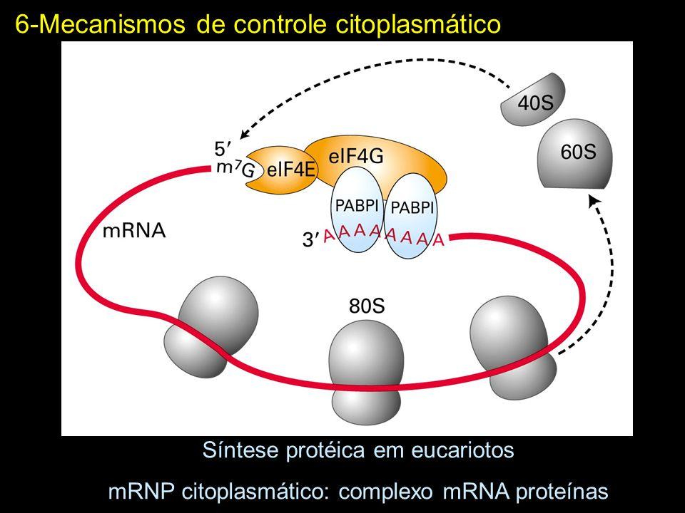 6-Mecanismos de controle citoplasmático