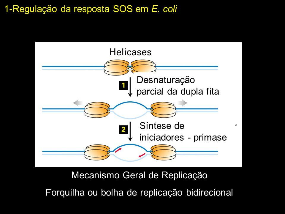1-Regulação da resposta SOS em E. coli