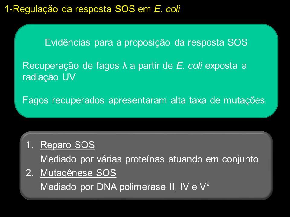 Evidências para a proposição da resposta SOS