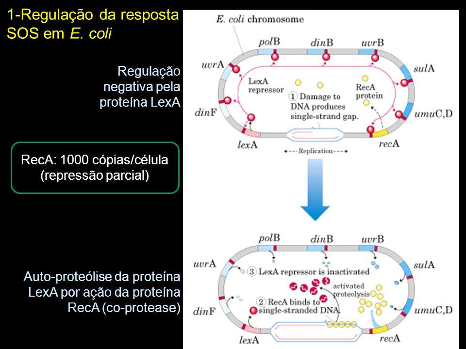 RecA: 1000 cópias/célula (repressão parcial)