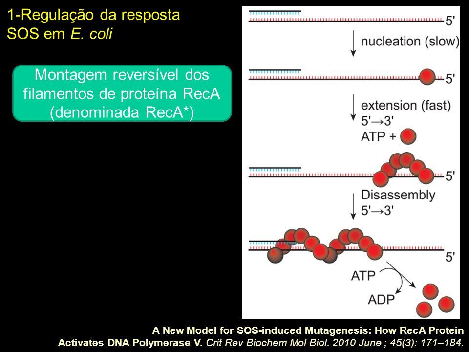 Montagem reversível dos filamentos de proteína RecA