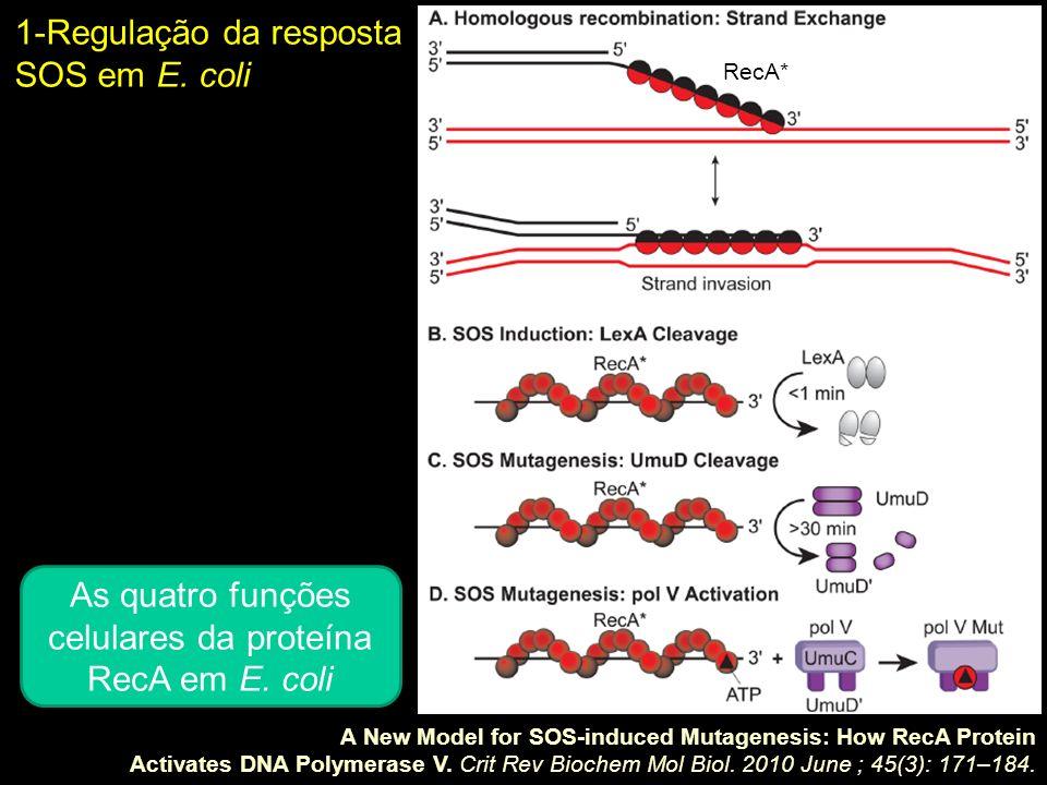 As quatro funções celulares da proteína RecA em E. coli
