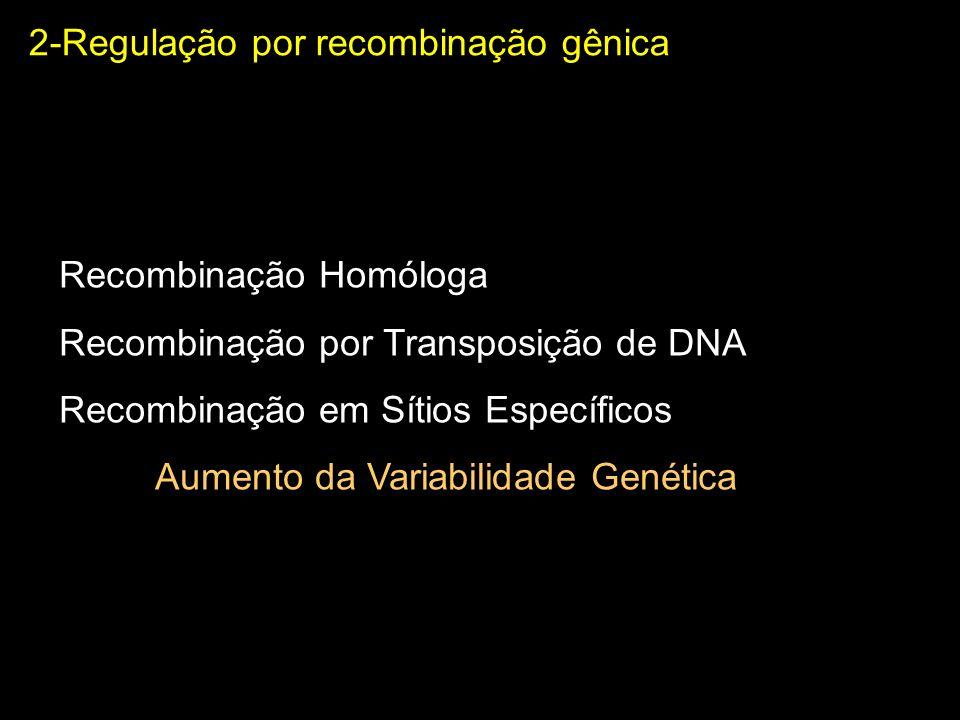 Aumento da Variabilidade Genética