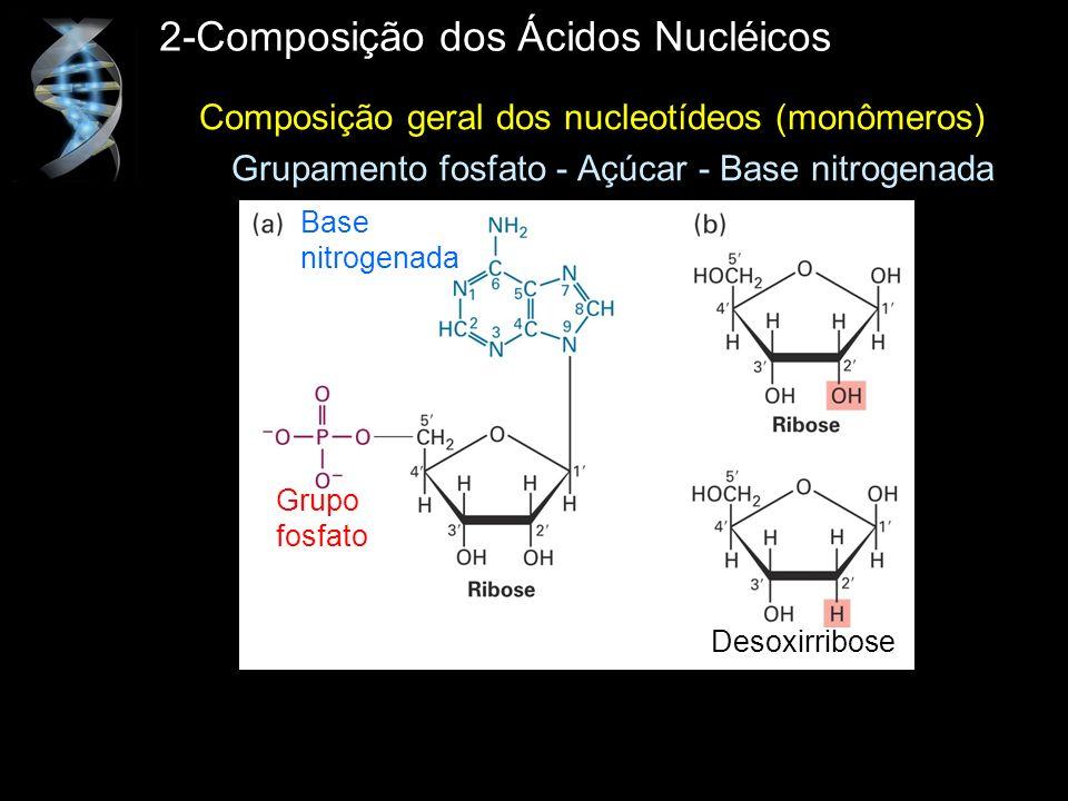 2-Composição dos Ácidos Nucléicos