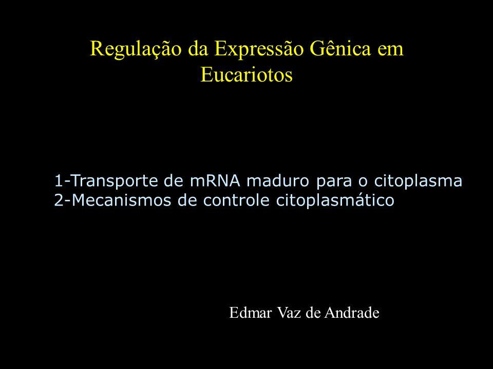 Regulação da Expressão Gênica em Eucariotos