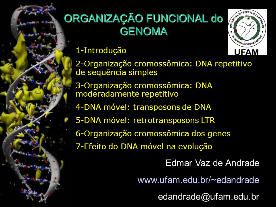 ORGANIZAÇÃO FUNCIONAL do GENOMA