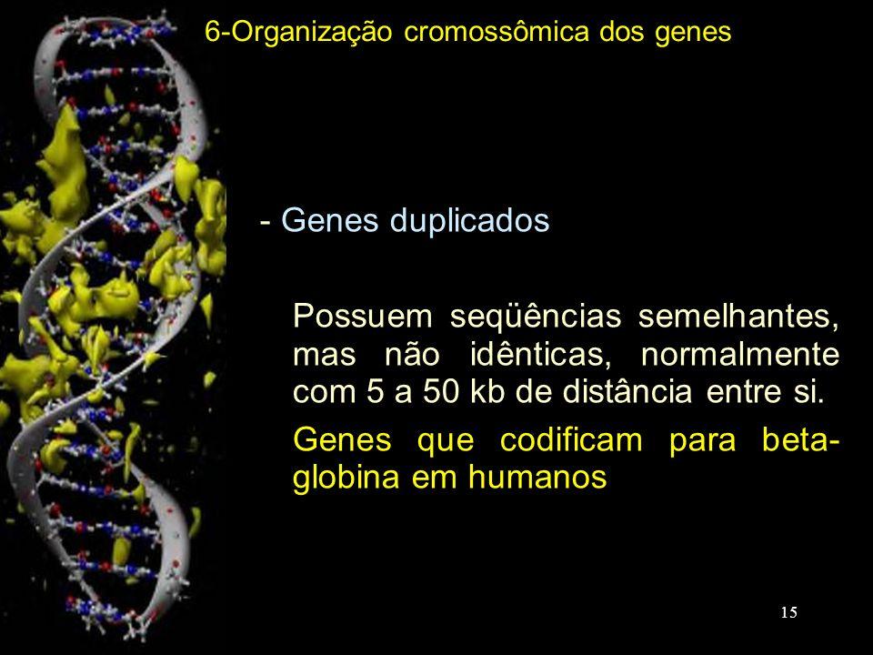 Genes que codificam para beta- globina em humanos