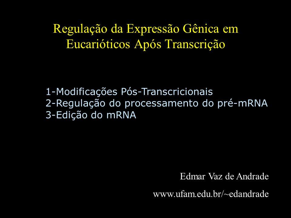 Regulação da Expressão Gênica em Eucarióticos Após Transcrição