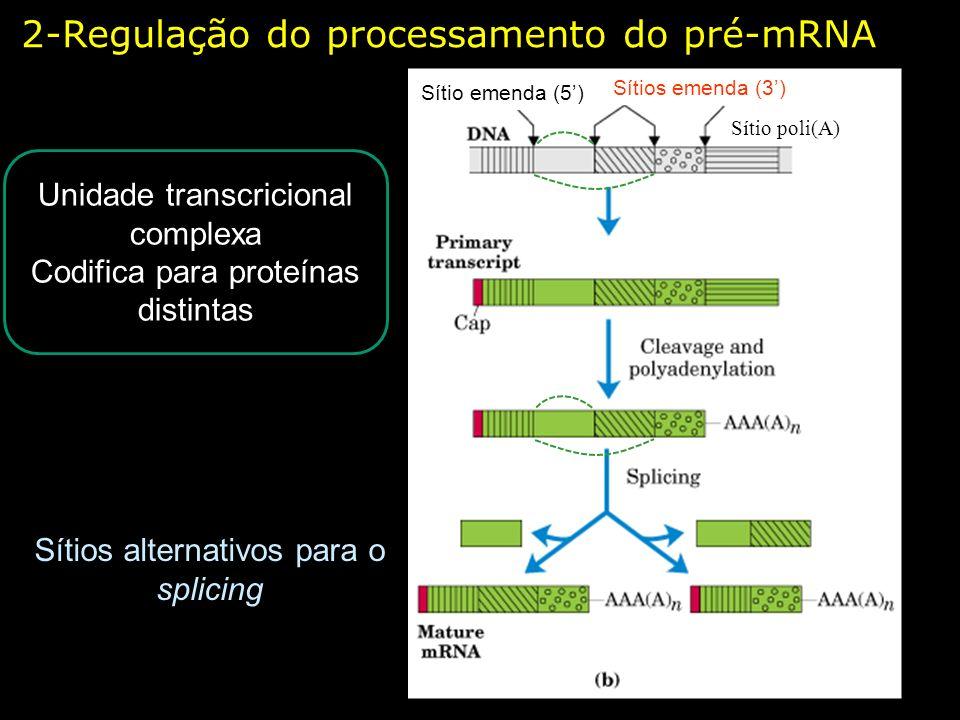 2-Regulação do processamento do pré-mRNA