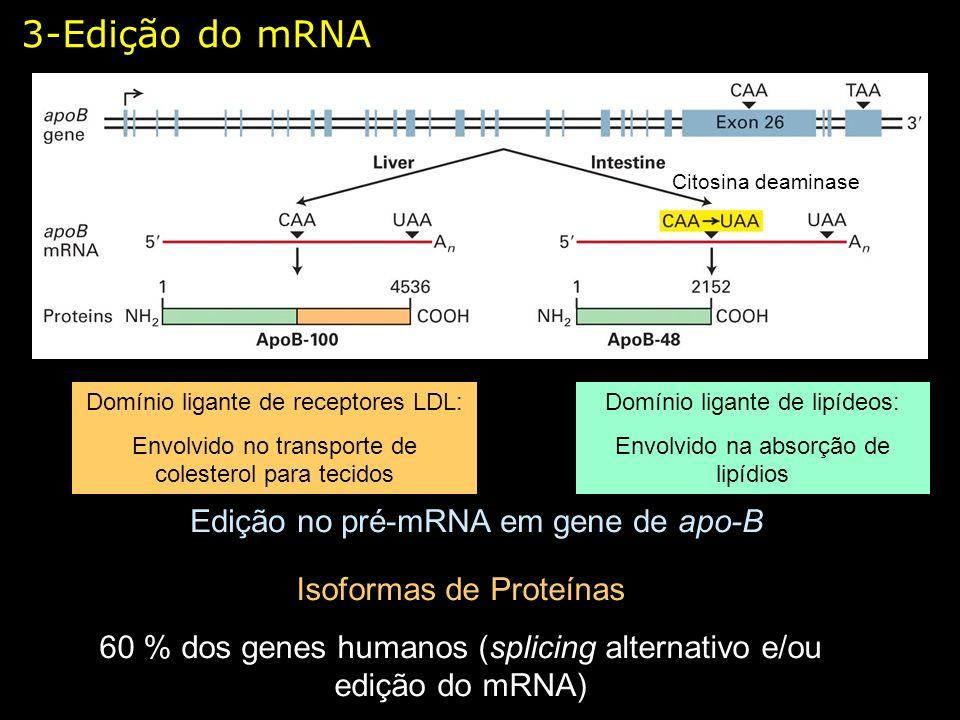 3-Edição do mRNA Edição no pré-mRNA em gene de apo-B