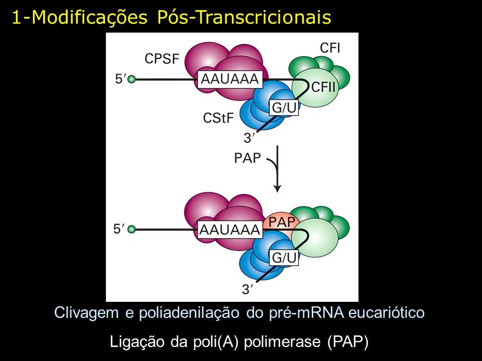1-Modificações Pós-Transcricionais