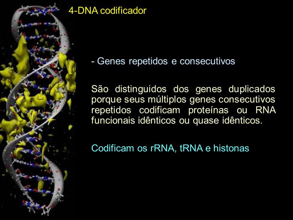 4-DNA codificador- Genes repetidos e consecutivos.