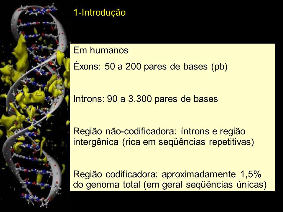 1-IntroduçãoEm humanos. Éxons: 50 a 200 pares de bases (pb) Introns: 90 a 3.300 pares de bases.