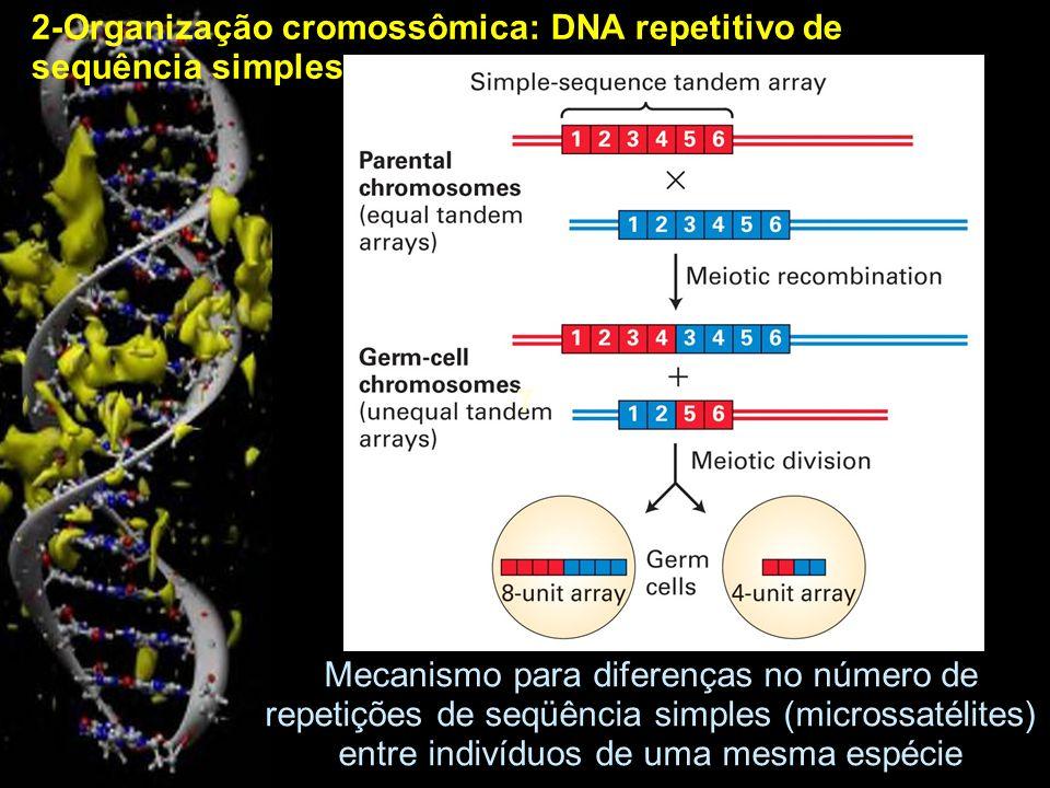 2-Organização cromossômica: DNA repetitivo de sequência simples