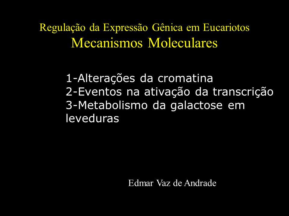 Regulação da Expressão Gênica em Eucariotos Mecanismos Moleculares