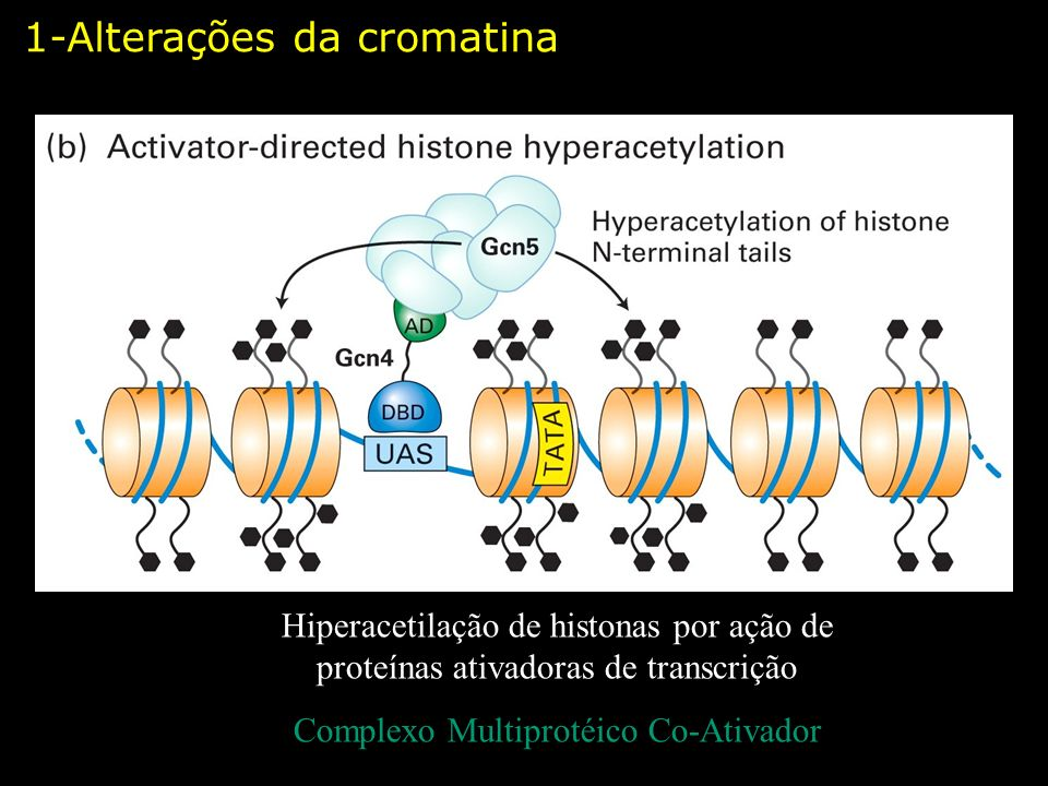 Complexo Multiprotéico Co-Ativador