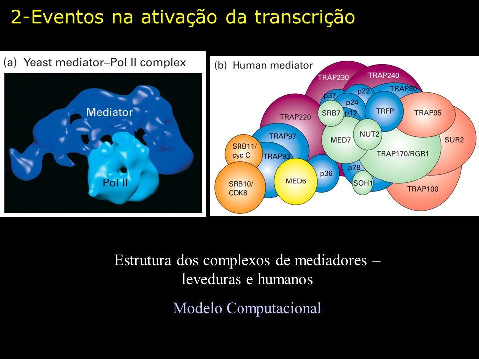 Estrutura dos complexos de mediadores – leveduras e humanos