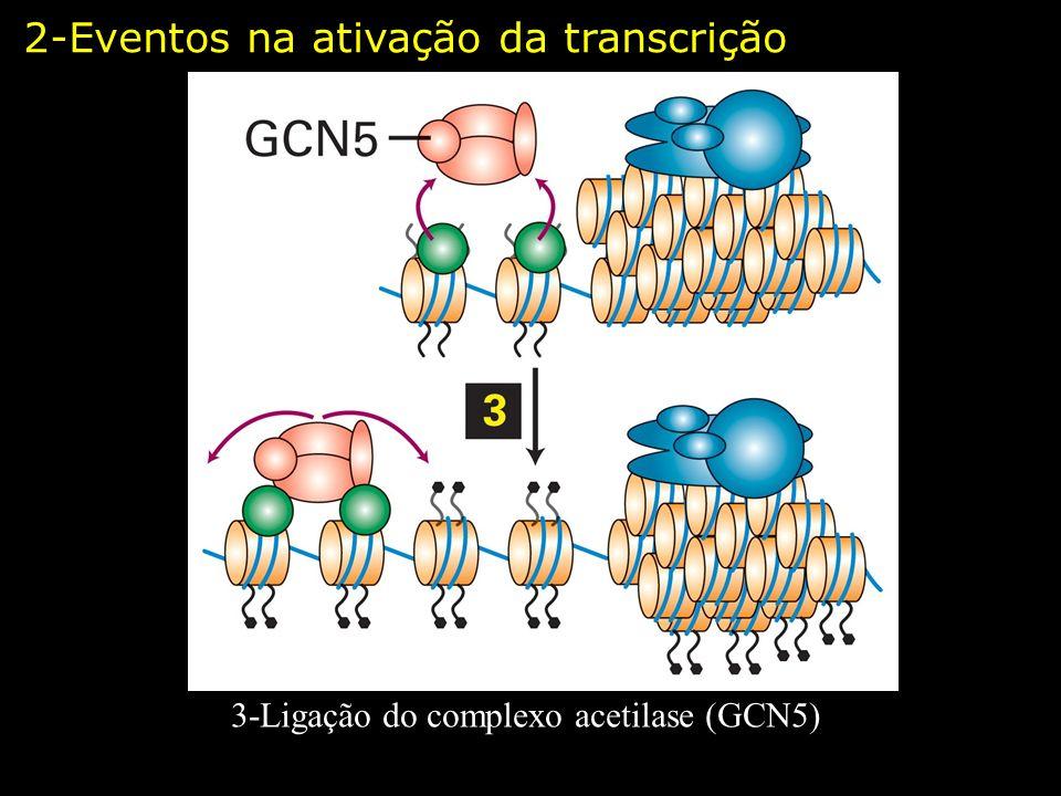 3-Ligação do complexo acetilase (GCN5)