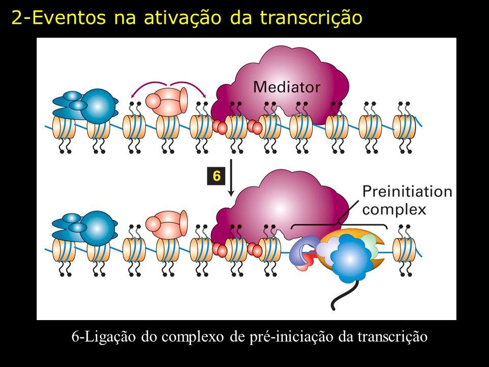 6-Ligação do complexo de pré-iniciação da transcrição