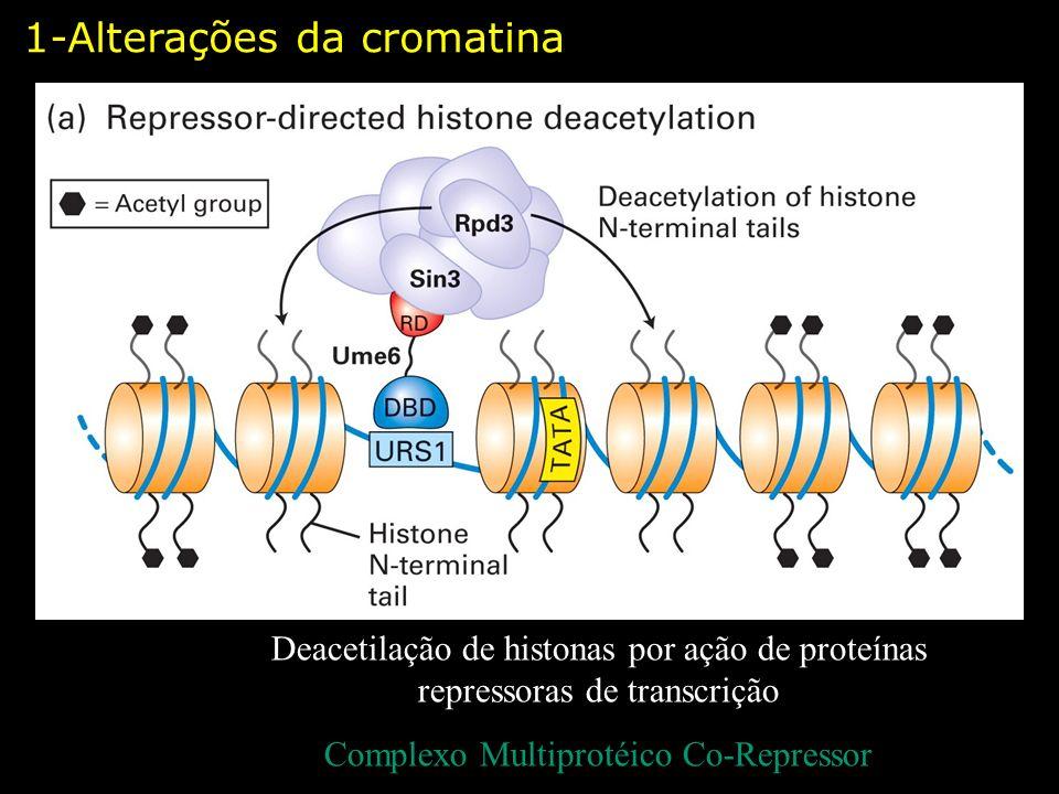 Complexo Multiprotéico Co-Repressor