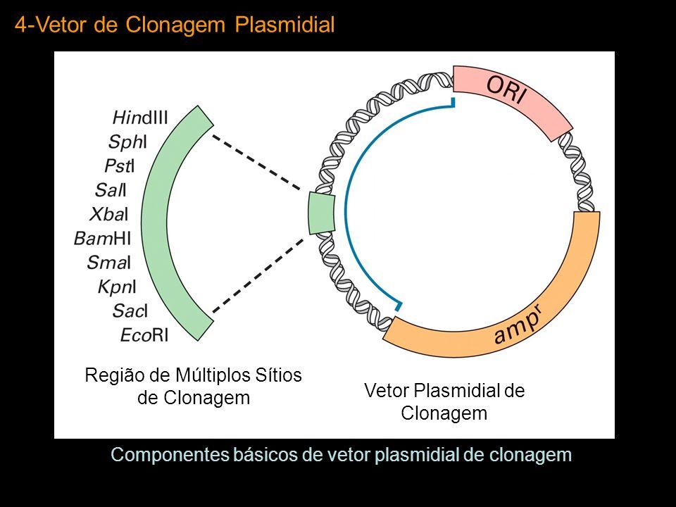 4-Vetor de Clonagem Plasmidial