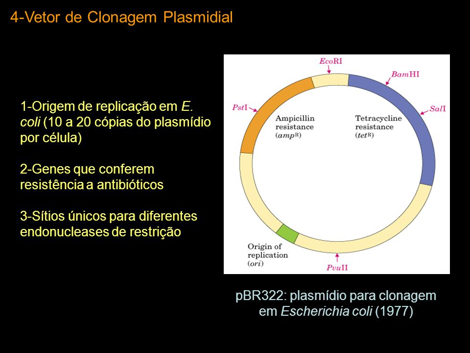 pBR322: plasmídio para clonagem em Escherichia coli (1977)