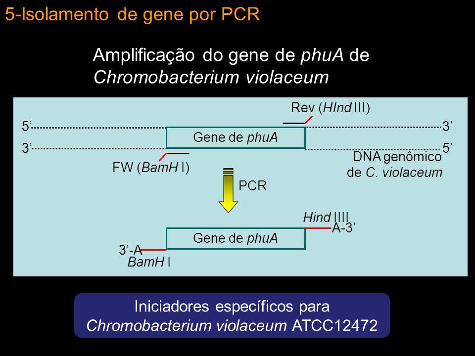 Iniciadores específicos para Chromobacterium violaceum ATCC12472