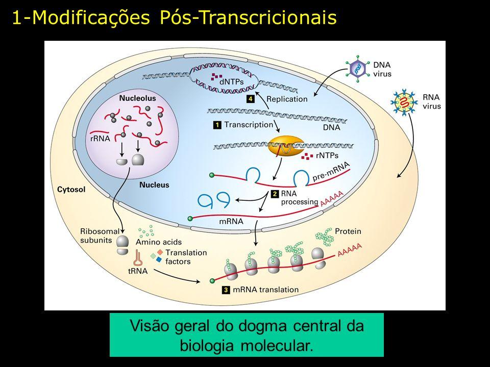 Visão geral do dogma central da biologia molecular.