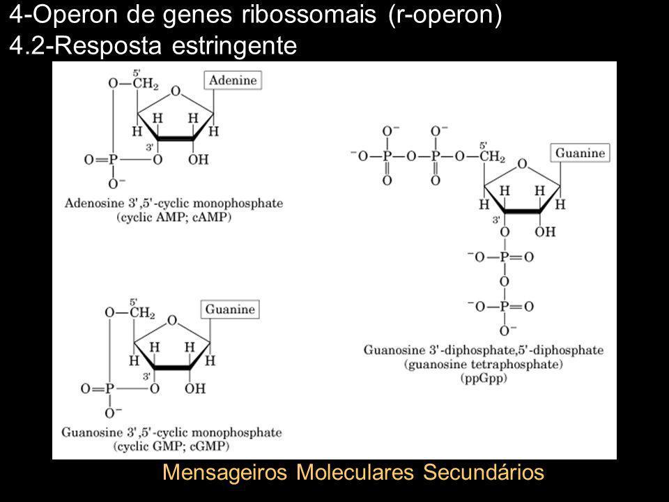 4-Operon de genes ribossomais (r-operon) 4.2-Resposta estringente