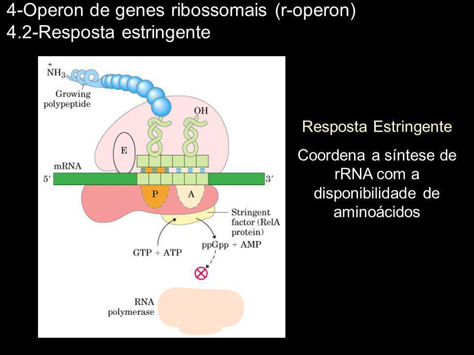 Coordena a síntese de rRNA com a disponibilidade de aminoácidos