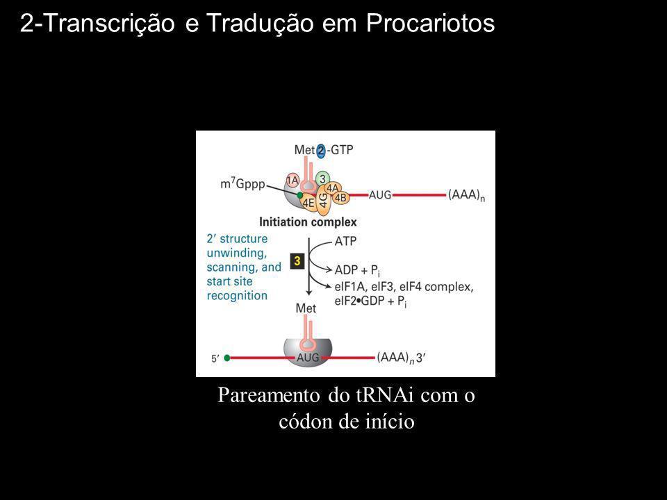 Pareamento do tRNAi com o códon de início