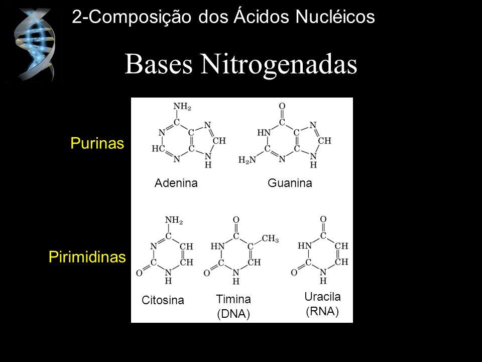 Bases Nitrogenadas 2-Composição dos Ácidos Nucléicos Purinas