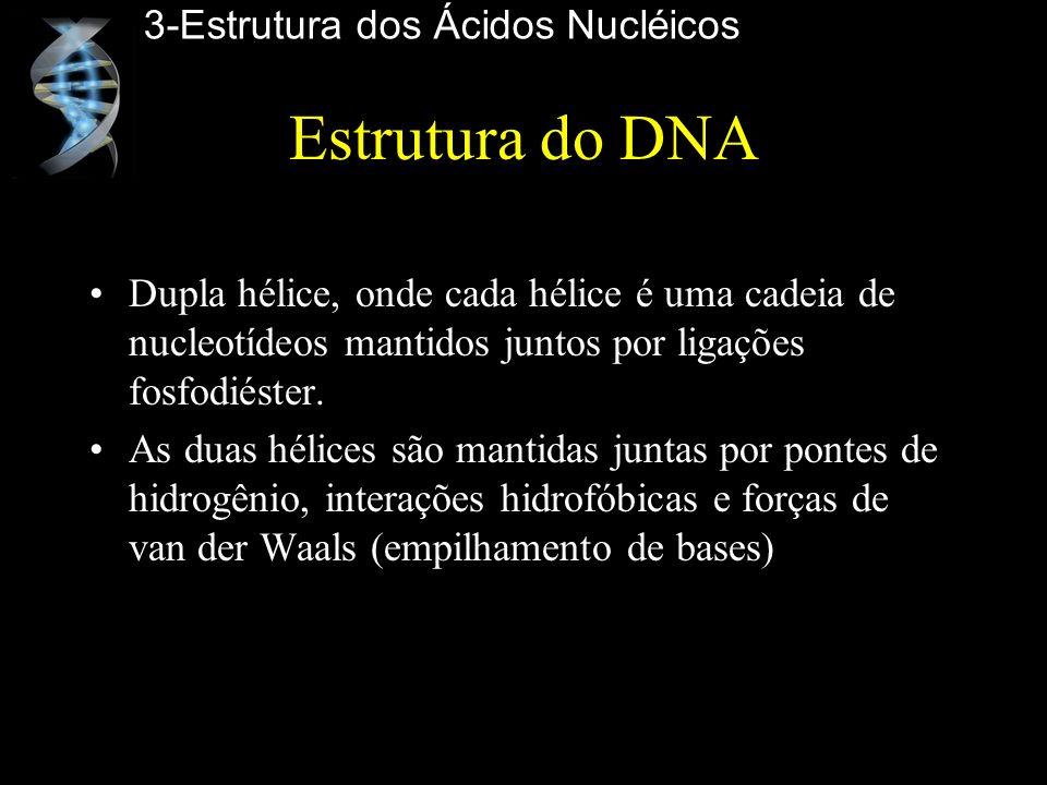 Estrutura do DNA 3-Estrutura dos Ácidos Nucléicos