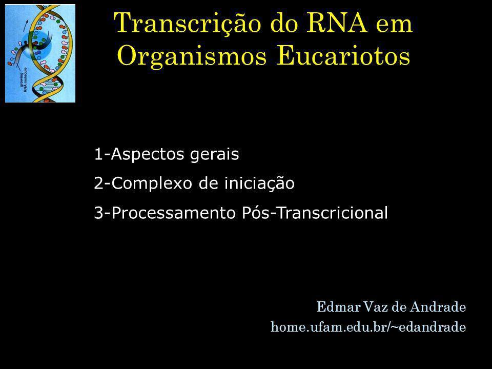 Transcrição do RNA em Organismos Eucariotos