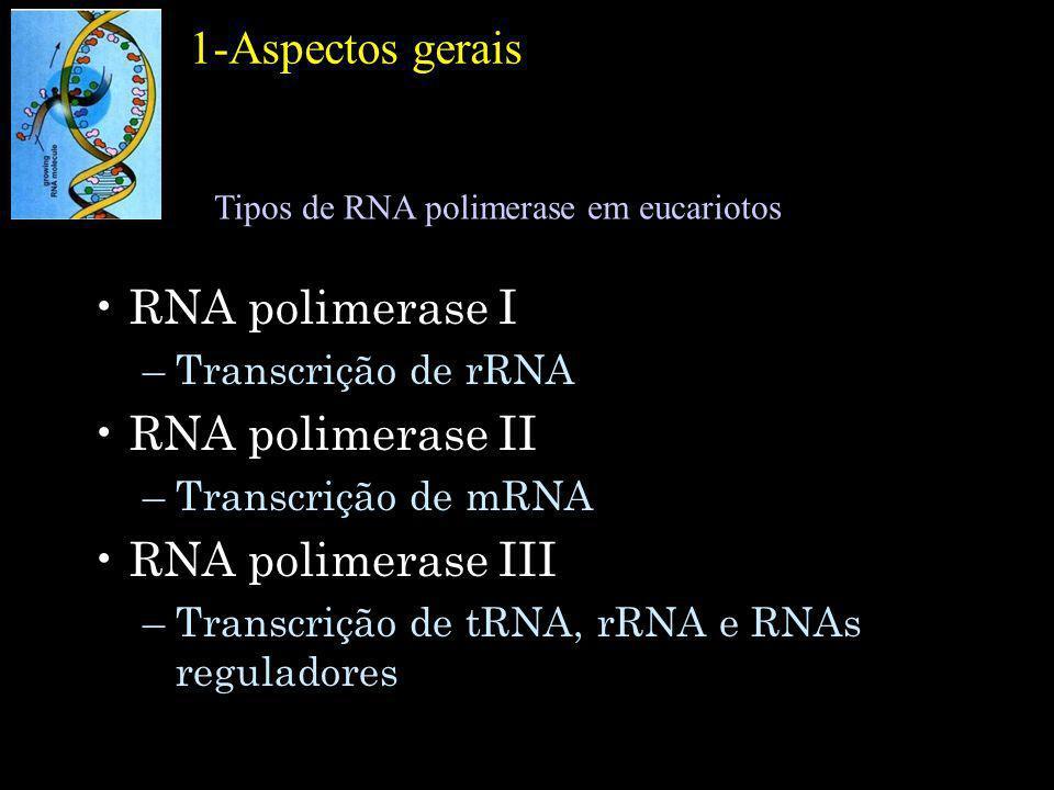 1-Aspectos gerais RNA polimerase I RNA polimerase II