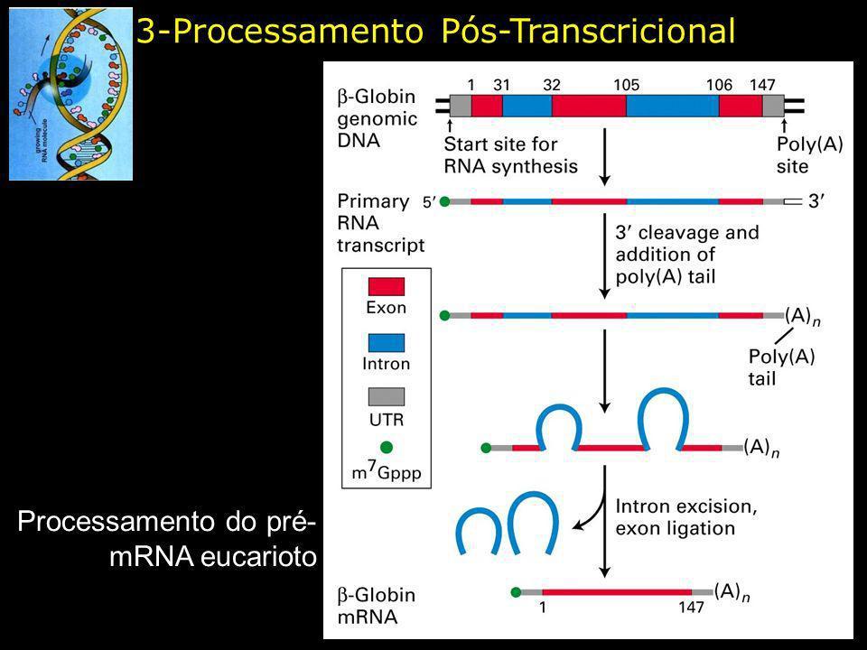3-Processamento Pós-Transcricional