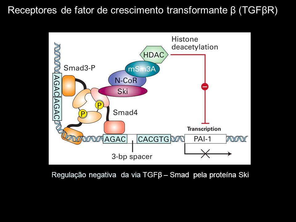 Receptores de fator de crescimento transformante β (TGFβR)
