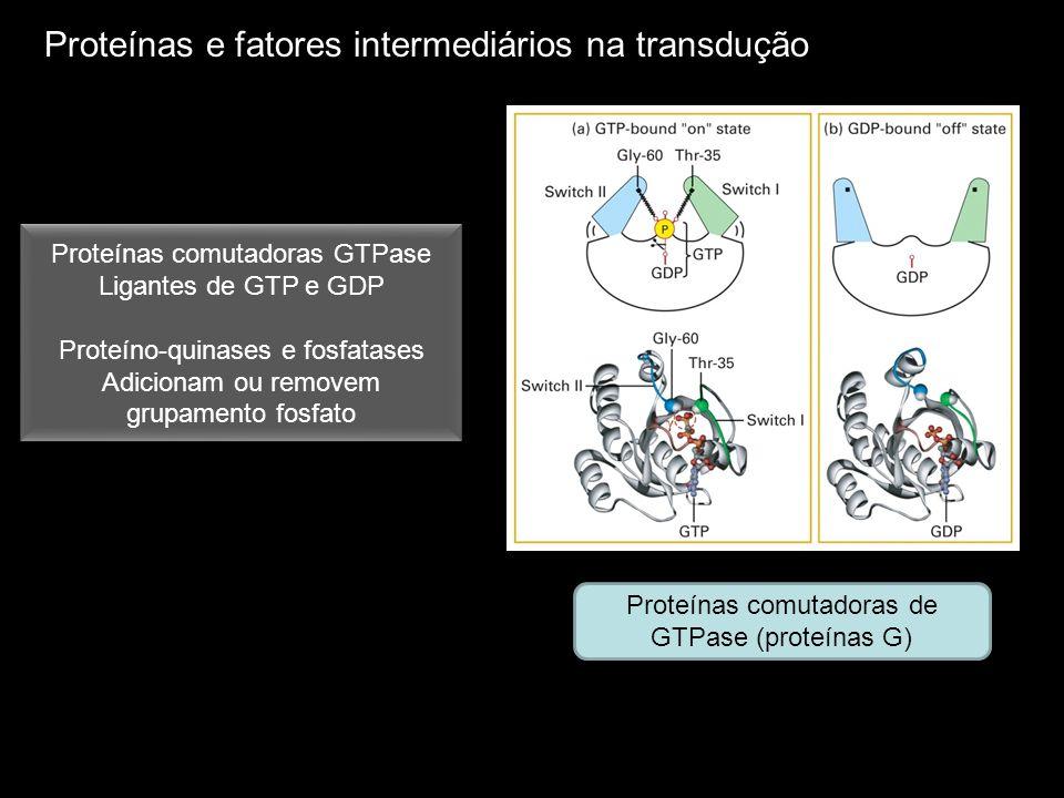 Proteínas e fatores intermediários na transdução