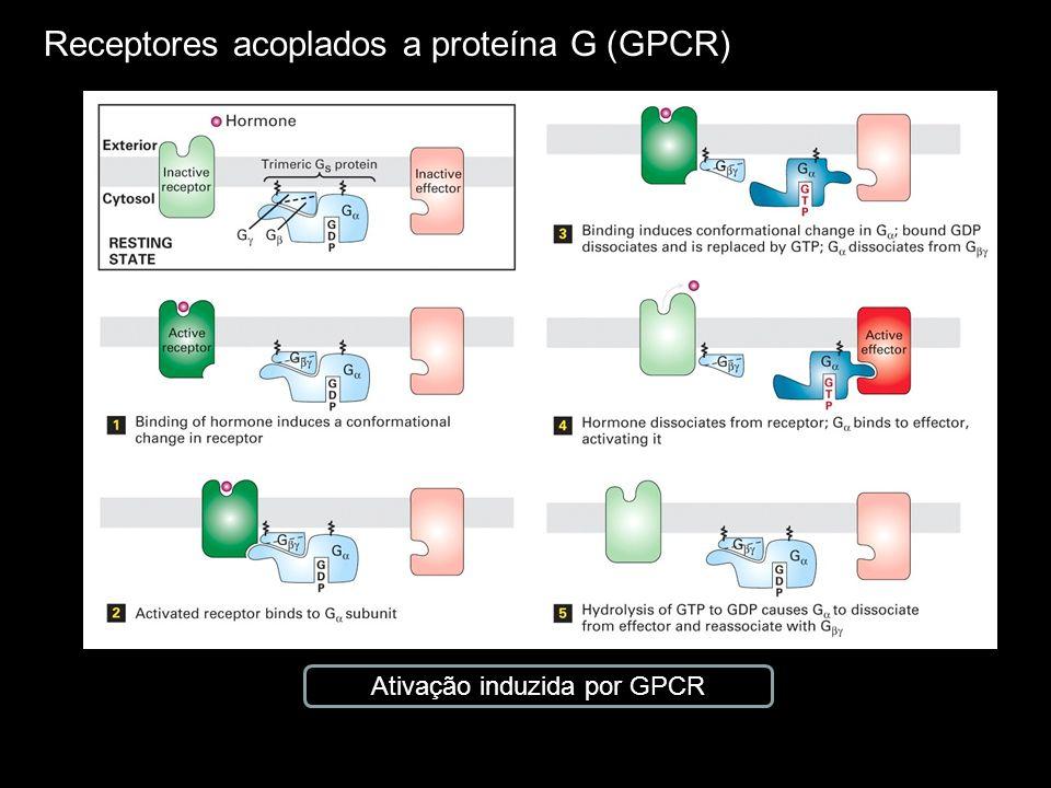 Ativação induzida por GPCR