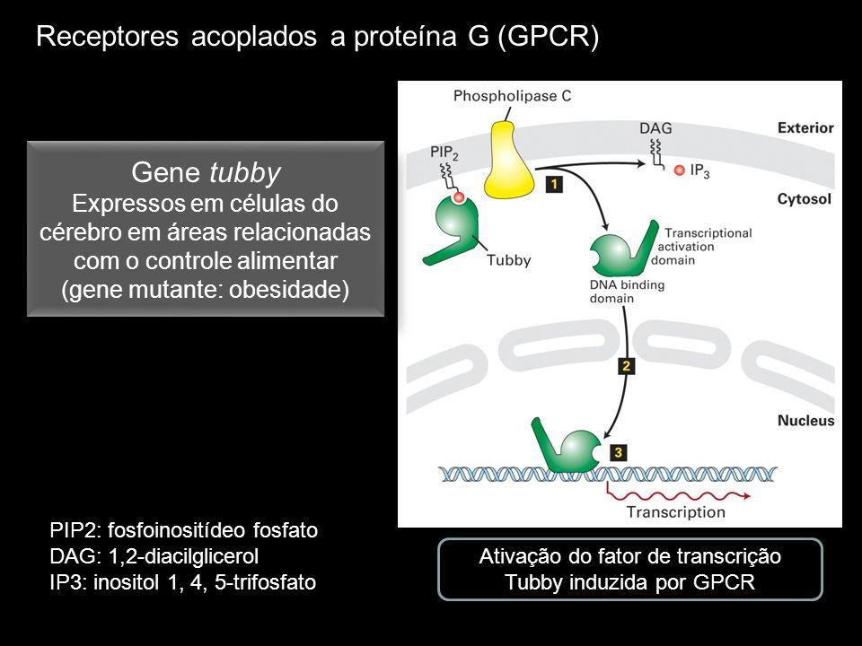 Receptores acoplados a proteína G (GPCR)