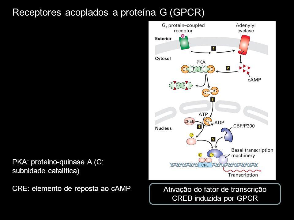 Ativação do fator de transcrição CREB induzida por GPCR