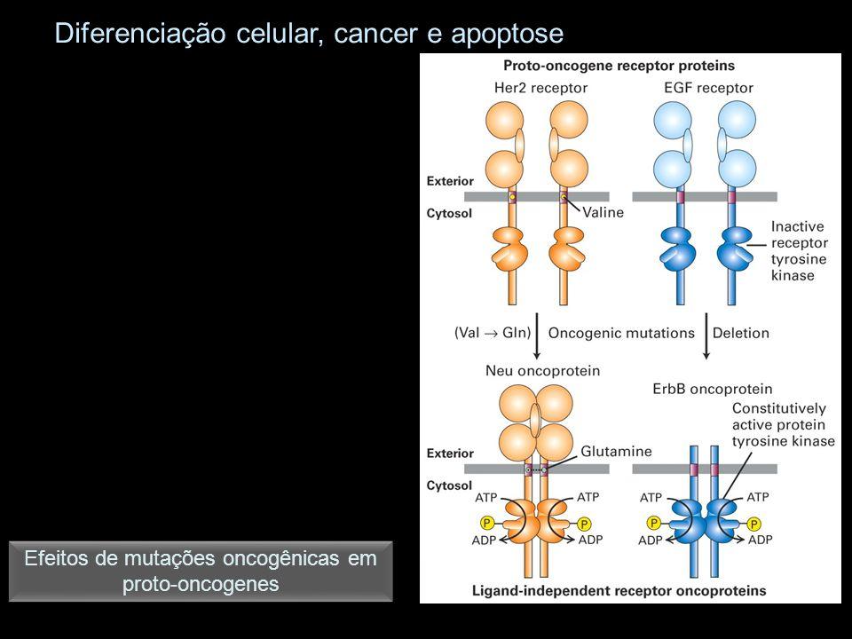 Diferenciação celular, cancer e apoptose